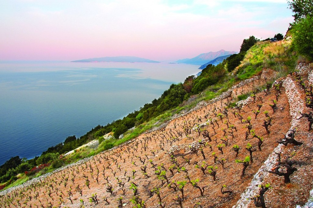 adriatic wine tour croatian wines best wines